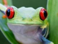 SIG_frog-200-200.jpg